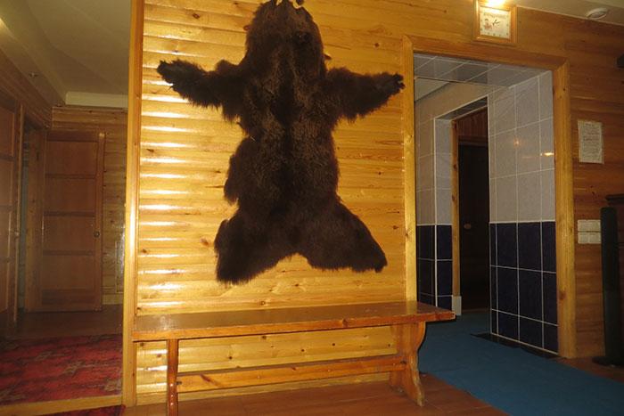 медведица томск кафе фото